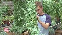 Luçon : les Espaces verts aux Floralies de Nantes