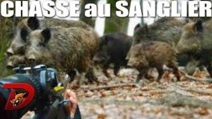 Attaque sangliers chasse à Chambouleurs !