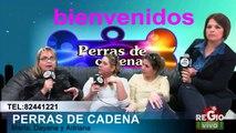 PERRAS DE CADENA 16 DE ABRIL DEL 2014