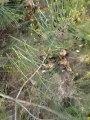 encore un ferme des beagles harriers de la chaume à tous vents