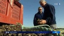 Charente-Maritime : des producteurs de moules ont perdu jusqu'à 100% de leur production