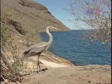 Galapagos Animals: Learn About Galapagos Animals & Plants During A Galapagos Cruise