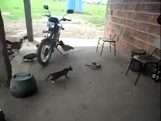 Chat contre serpent... Réaction hilarante à la fin sur Orange Vidéos b60cca7609bf