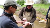 Fish shocking with John Kelly in the Anacostia