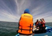 Tourists Come Face to Face With Gray Whales in Mexico