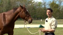 Cheval Pratique - J'éduque mon cheval : Espace personnel et contrôle