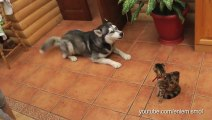 Cute Dogs want to be friend with Cats... Animal compilation