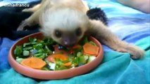 Cute Animals Eating Compilation 2014 - Cute Animals Doing Cute Things