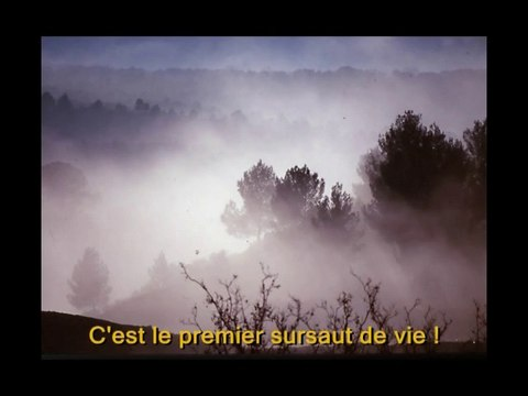 Charles de Foucauld: de la tristesse à la joie (jeunesse)