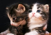 Best Of Animaux Drôles et Mignons - Cute and Funny Animals