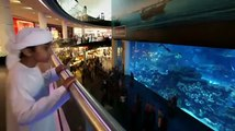 Dubai Expo 2020   Al Wasl Yacht Charters & Fishing Dubai