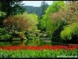 Doğayı sevenler için ( OKYANUS )