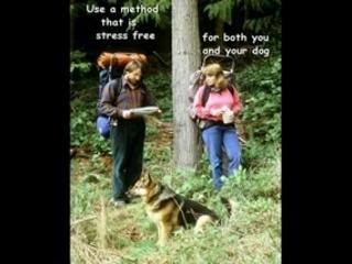 German Shepherd Zone Training