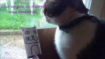 Création d'une armée de chats en dessinant sur des rouleaux de papier toilette