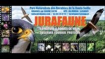 Parc Animalier Jurafaune