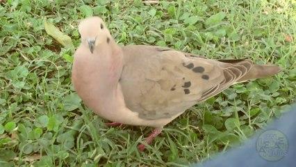 DRAMATIC BIRD !!