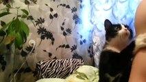 İlgi İsteyen Kedi