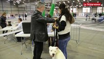 Saint-Brieuc. Séance de confirmation de race à l'Exposition canine internationale