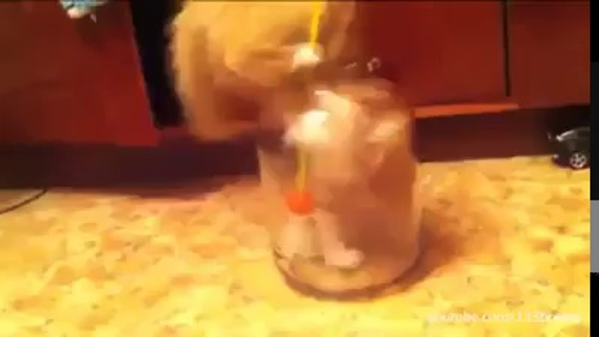 funny and cute cats video
