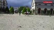 Lamballe. 150 engagés au concours de dressage au haras
