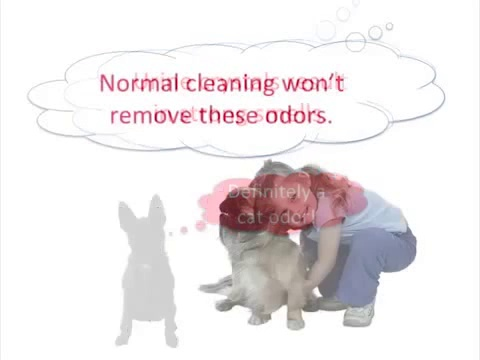 ▶ Vaughan, Ontario Carpet Stain Odor Removal