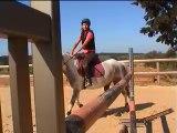 Saut d'obstacles - Equitation