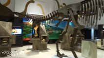 The Dinosaur Museum in Khon Kaen, Phuwiang