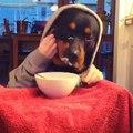 İnsan Gibi Yemek Yiyen Köpek
