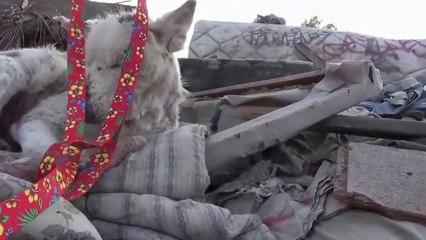 Default Project destin une chienne mourante  abandodans une décharge donne une leçon d'humaniténné   (HD)