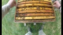 J'ai testé pour vous : faire l'apiculteur, avec des abeilles sauvages...
