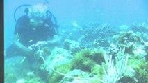 Prudence après la possible découverte du bateau de Christophe Colomb
