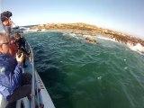 Les Requins Blancs du Cap ! Plongée au plus près du grand prédateur et observez ses parties de chasse effrayantes ! Images de Jean-Marie pour La Palanquée New's - http://www.palanquee.com