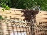 """Attaquée par plus de 30.000 abeilles: """"J'ai vu un énorme nuage noir approcher"""" - 16/05"""