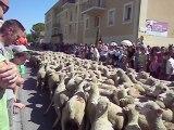 Transhumance à Jonquières de 2000 moutons