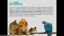 Franchising Animali domestici, apri il tuo negozio di animali o di alimenti e prodotti per animali