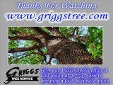 Tree Removal Service in Indianapolis - Snow Removal - Tree Trimming