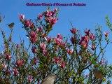 Chants d'Oiseaux du jardin et Fontaine