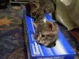 武蔵AS GROUPのティッシュ箱に入りたがるカワイイ猫 おもしろ動画