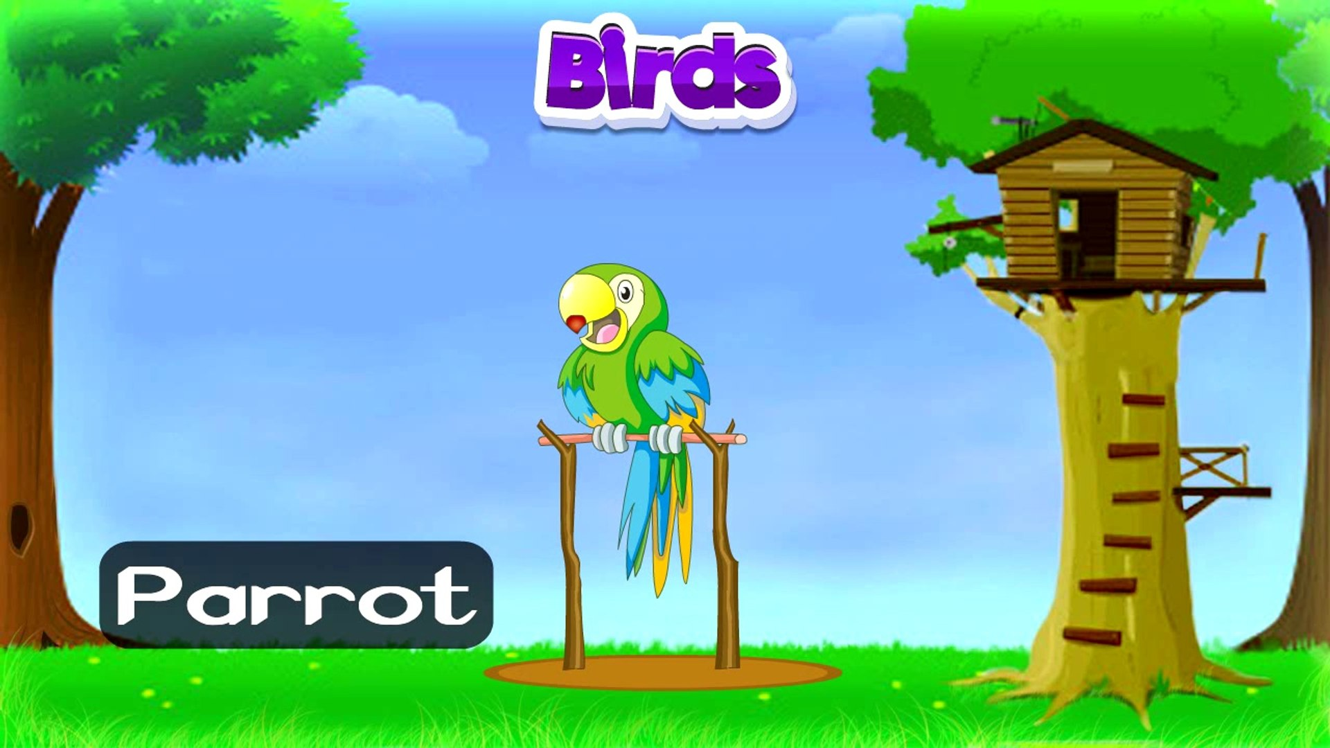 Types of Birds | Animated Video For Kids | English Animation Video