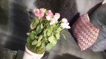 Une composition florale pour amoureux transis