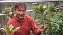 A la découverte de plantes menacées