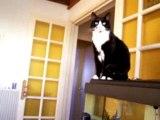 maryon et le chat