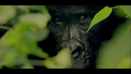 Congo : Virunga National Park