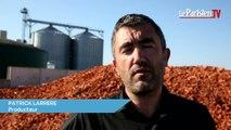 Un producteur de légumes crée de l'électricité avec des carottes