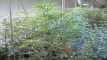 Reuters: U.S. DEA 'most Interested' In U.S. Investors In Canadian Marijuana Firms