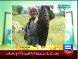 Hasb e Haal 9th October 2014 Full Show on DunyaNews