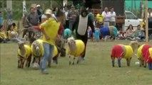 Un Mondial des moutons oppose la Colombie au Brésil, dix jours avant le vrai Mondial