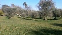 A vendre - terrain - St Cezaire Sur Siagne (06530)