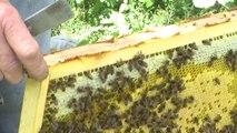 Hautes-Alpes : Transhumance des abeilles dans les montagnes