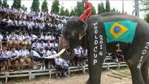 Ds éléphants jouent au foot en Thaïlande en amont du Mondial